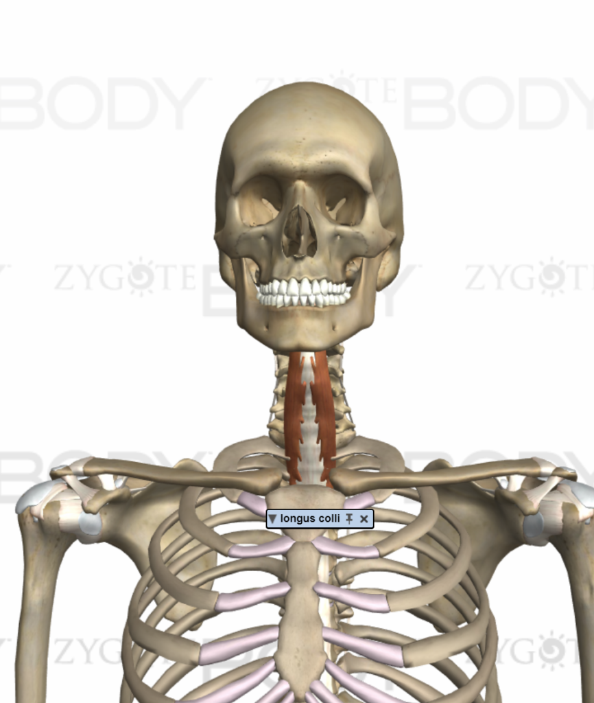 Head And Neck Muscle Imbalances Stronglinksfitness