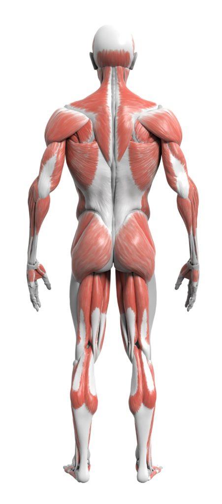 Static Posture Assessment Strong Links Fitness